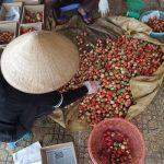 Vietnam'ın Karadeniz'i: Da Lat Gezi Rehberi